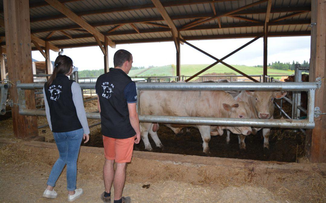 Des élèves du lycée des Vaseix en visite à la ferme de Saint-Martial-le-Vieux