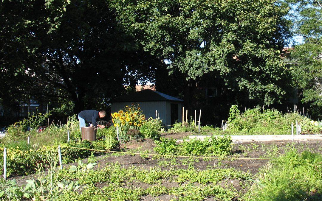 Inauguration du jardin partagé à Sornac